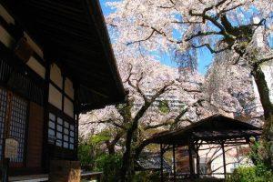 Le printemps à Kōbe