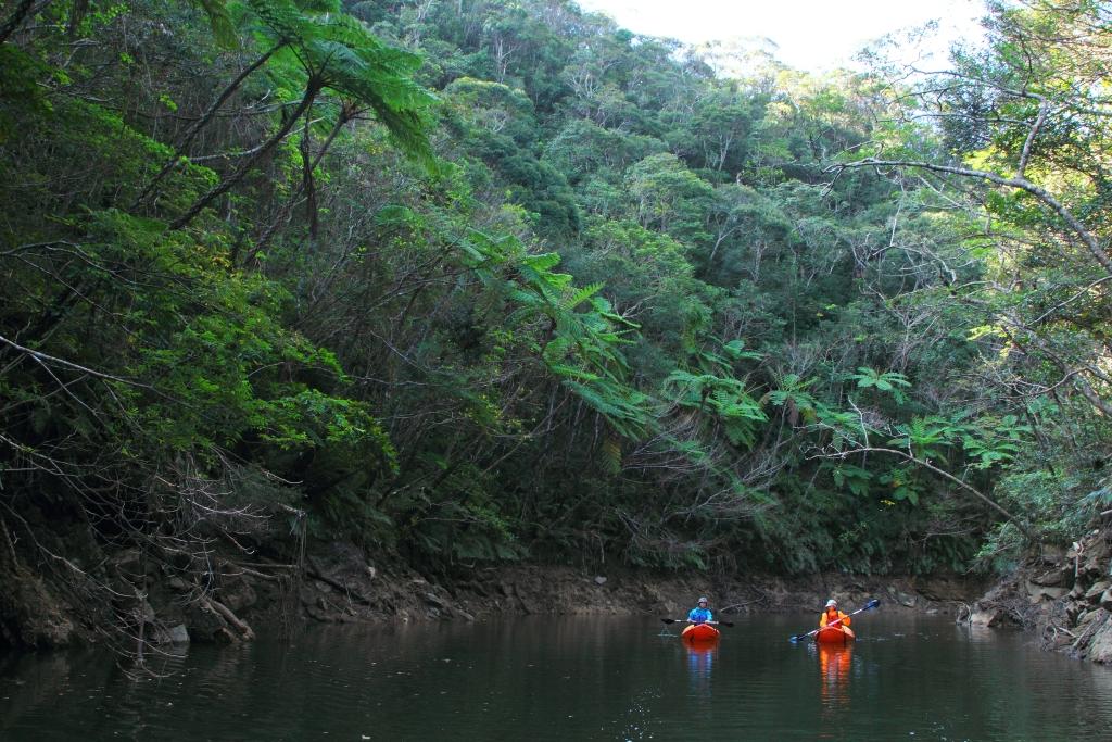 Kayak dans la forêt de...