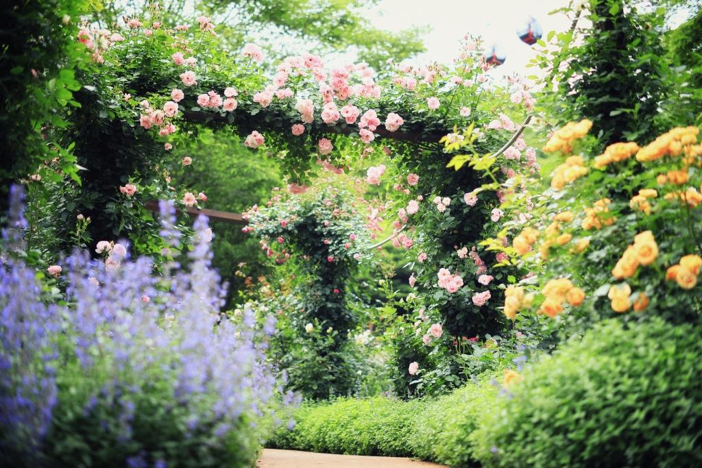 Jardin des plantes de ...