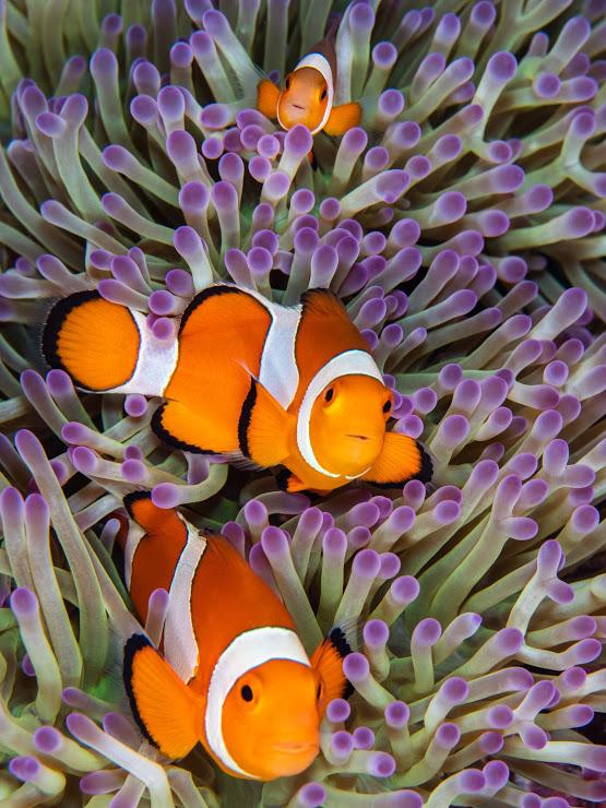 Plongée sous-marine et snorkeling