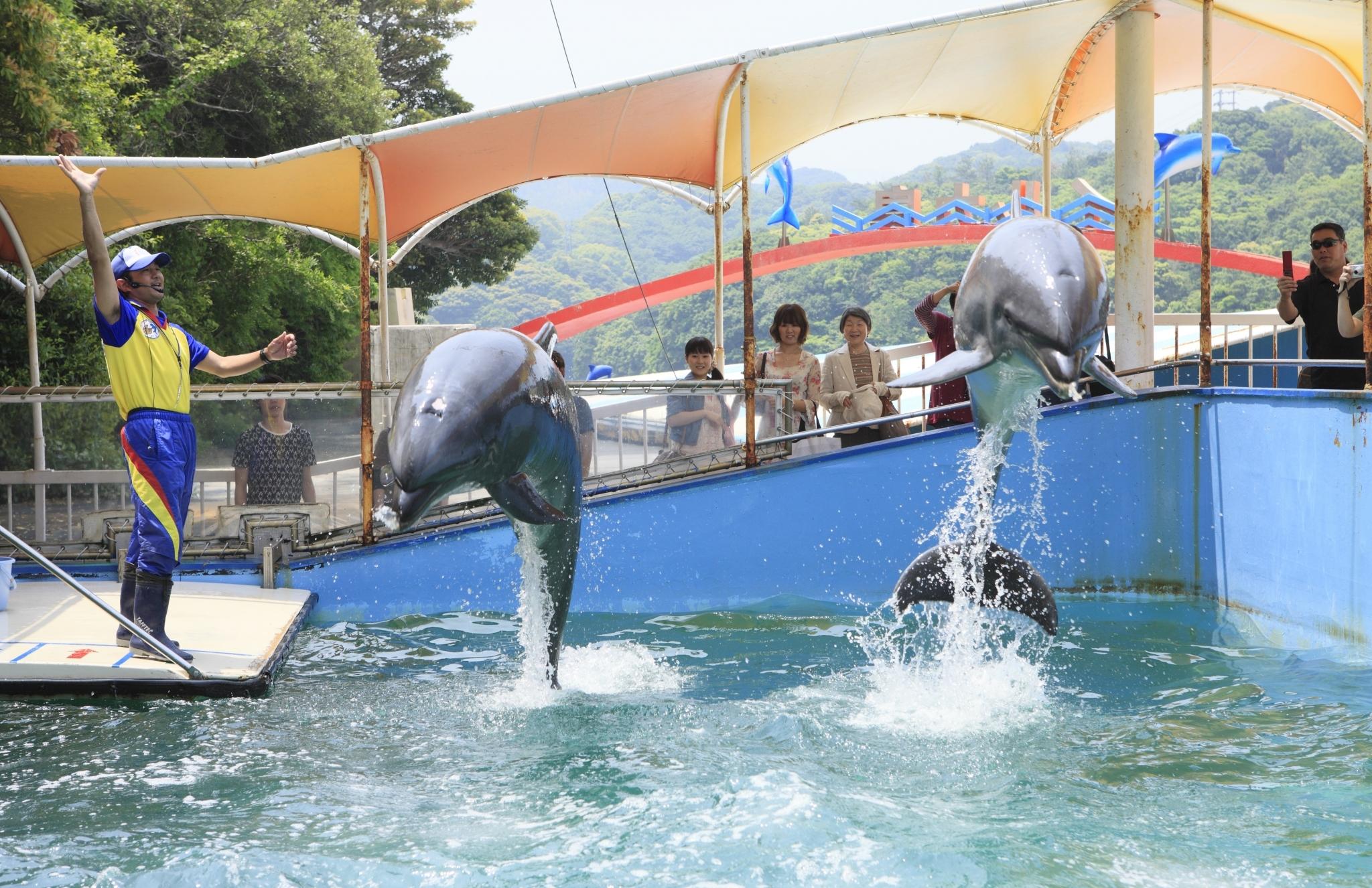 Croisière dans la baie de Toba et la visite de l'île des dauphins (Irukajima)