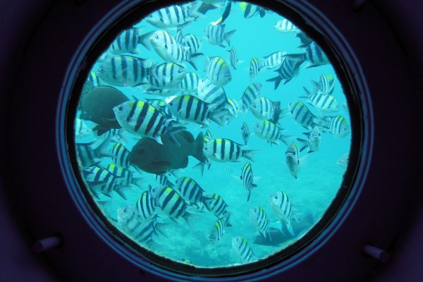 sous-marin récif corallien