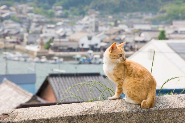 chat bucolique traditionnelle fukuyama historique tourisme japon hiroshima tomonouchi ponyo