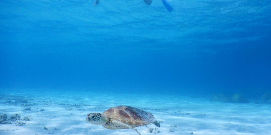 Japon Okinawa Kerama Tourisme Corail plongée snorkeling plage tortue corail kayak