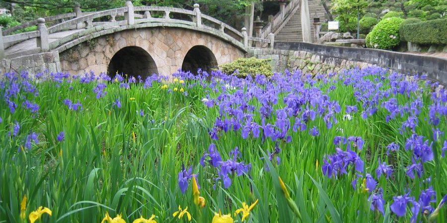 sanctuaire sugawara pont shinto jardin japonais iris bonsai kasaoka okayama Japon voyage détente nature terre sacrée