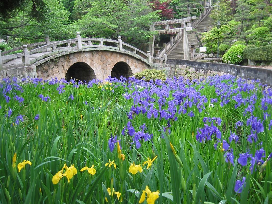 Sugawara: le sanctuaire aux iris et au pont à lunettes