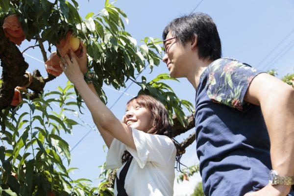 fruits cueillette okayama akaiwa raisin muscat pione pêche