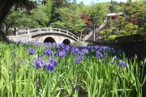 Sugawara : le sanctuaire aux iris et au pont à lunettes