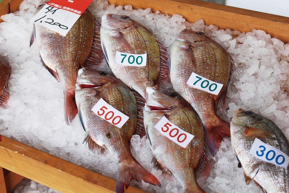 Marché au poisson de la coopérative Oshima-Minohama