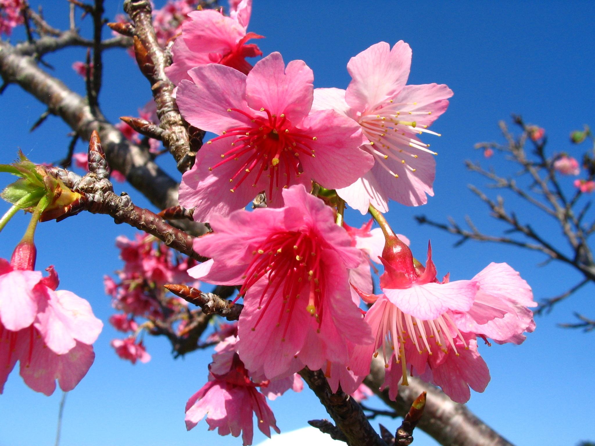 L'hiver à Okinawa