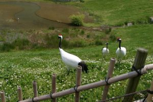 La réserve de Kibiji Tsuru no Sato