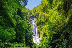 La cascade de Kanba et ses singes sauvages