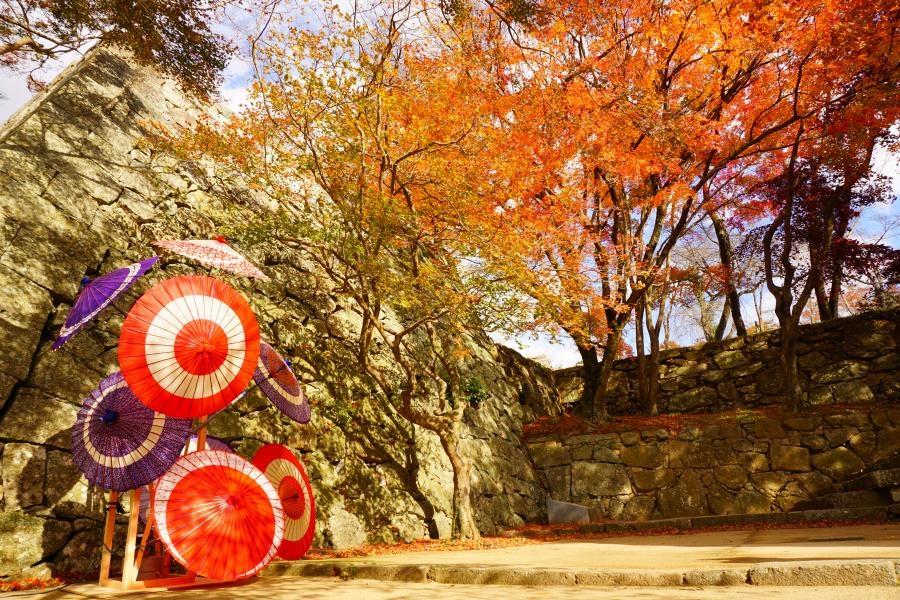 La fête des momiji à Tsuyama