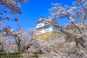 Le château de Tsuyama et le parc Kakuzan