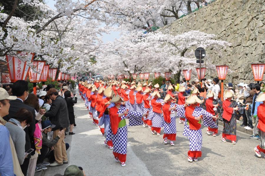 La fête des cerisiers de Tsuyama