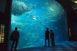 Nouvel aquarium d'Enoshima : explorer la biodiversité marine autour d'Enoshima