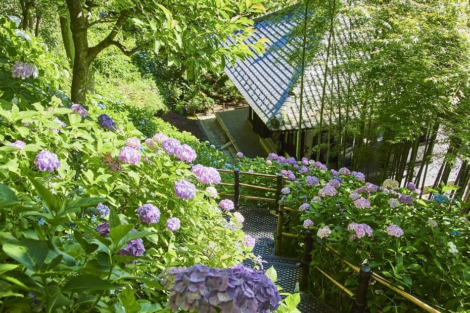 Hase-dera : le temple des fleurs et des paysages