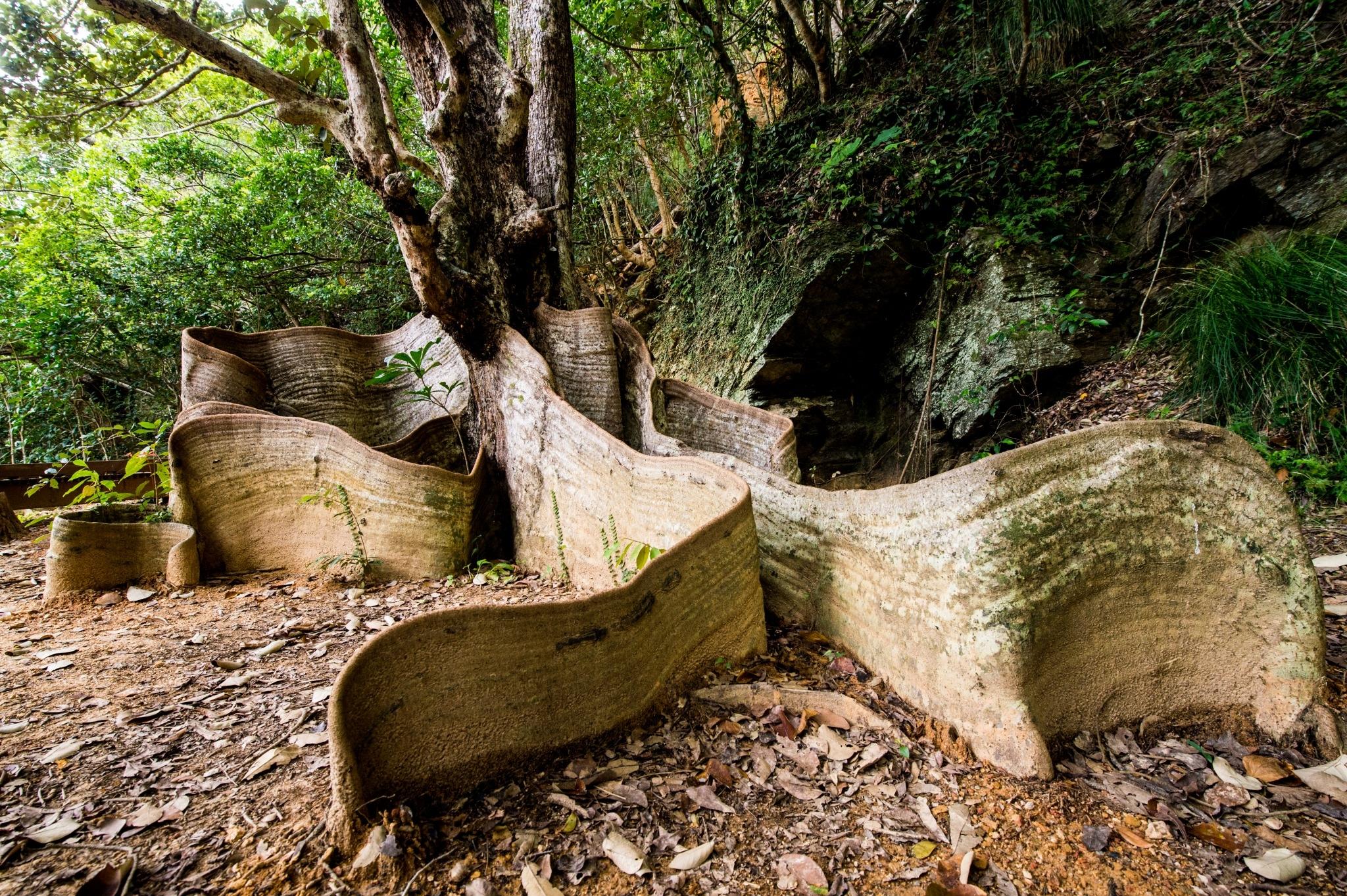 Le parc national de Yanbaru