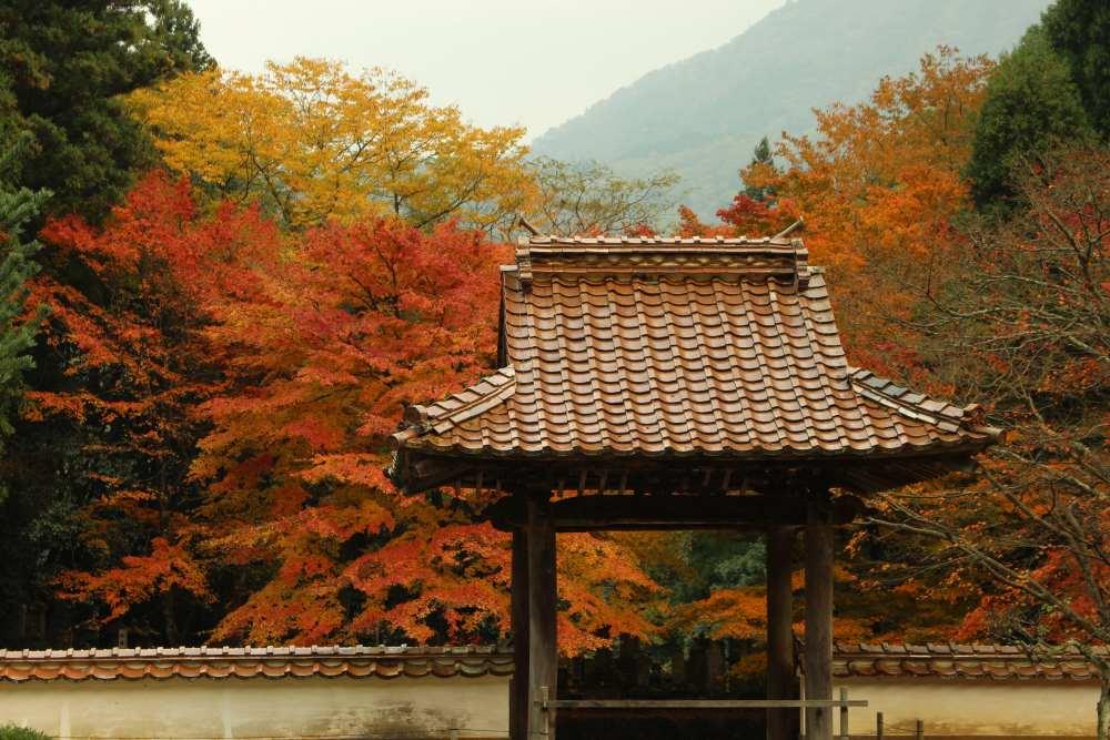 WA-SAKURA - Japon Voyage Tourisme Shimane Tsuwano Yōmeiji temple Kakuôzan extérieur nature montagne automne kôyô extérieur torii
